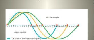 Калькулятор расчёта биоритмов
